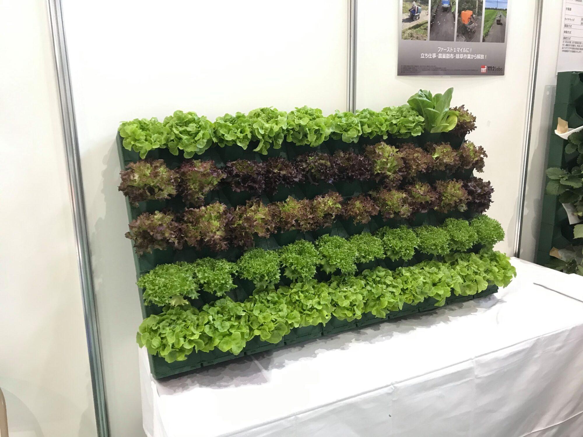レタスの立体栽培ができるマラナタプランターの画像
