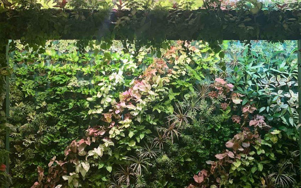 マラナタの屋内の壁面緑化の画像