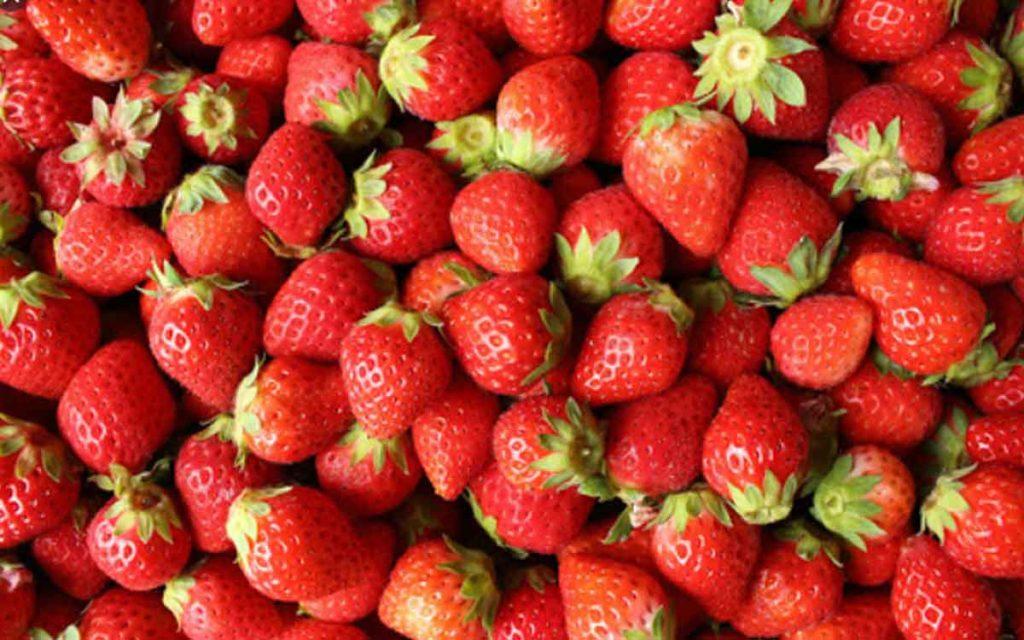 イチゴ栽培の挑戦