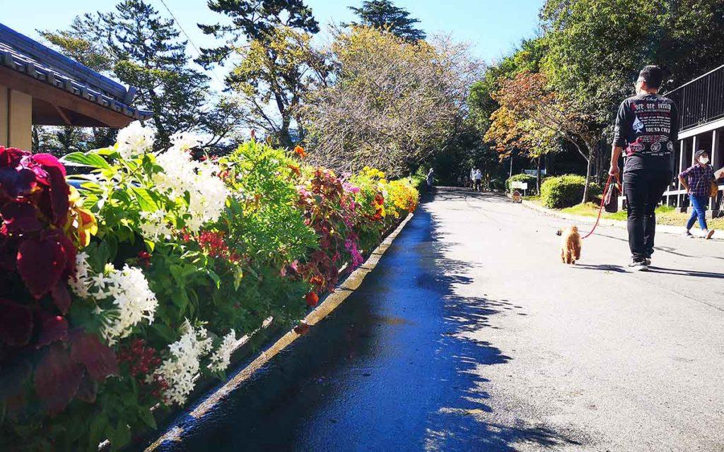 浜松城公園のお花の歩道の画像