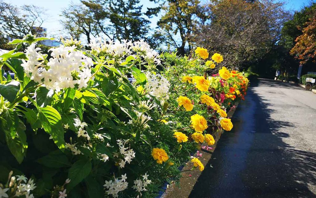 スターバックス前のお花の歩道のアップ画像