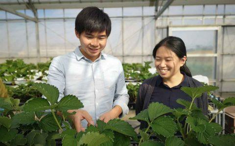 イチゴ栽培の呉夫婦の画像