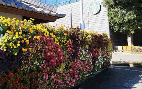 浜松城のフェンスの壁面緑化のその後の画像