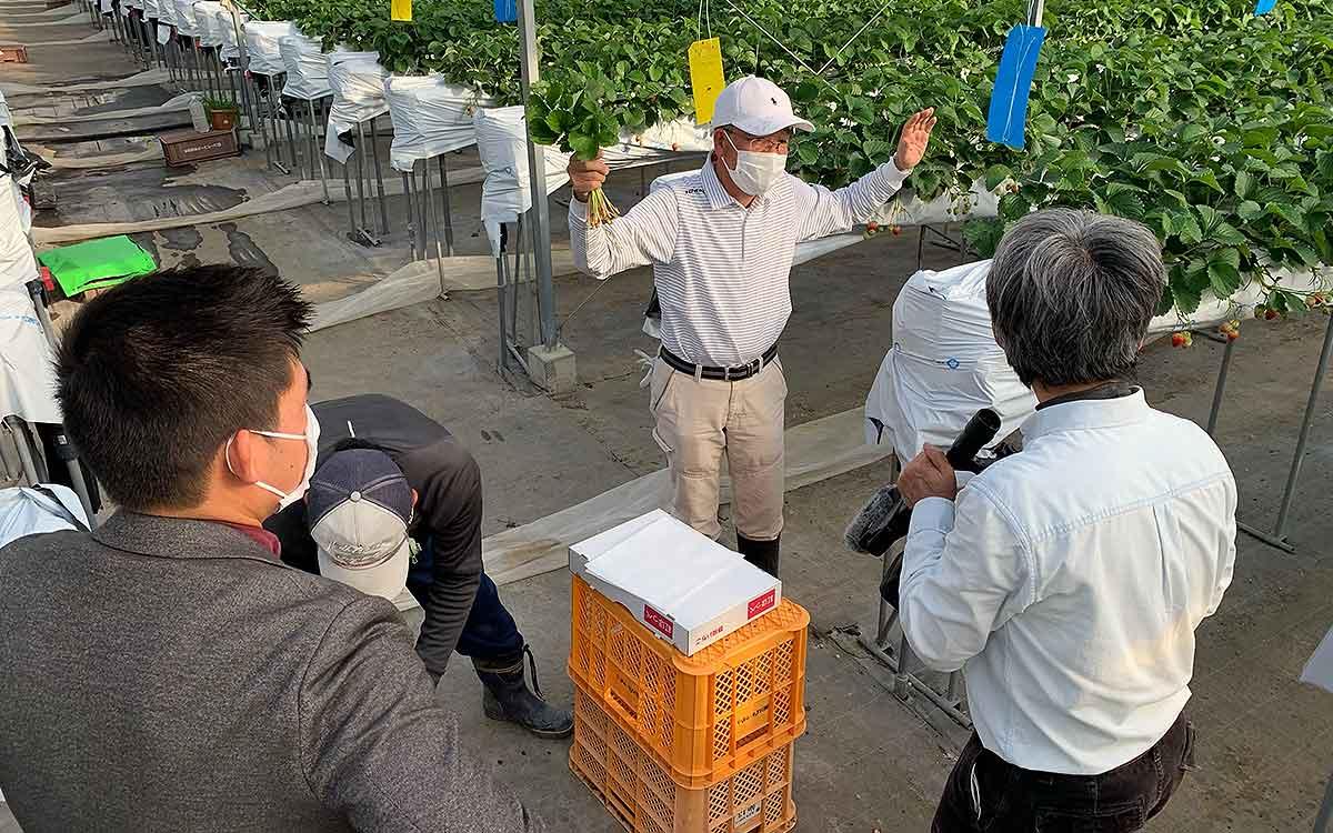 イチゴの立体栽培のTV撮影の様子の画像