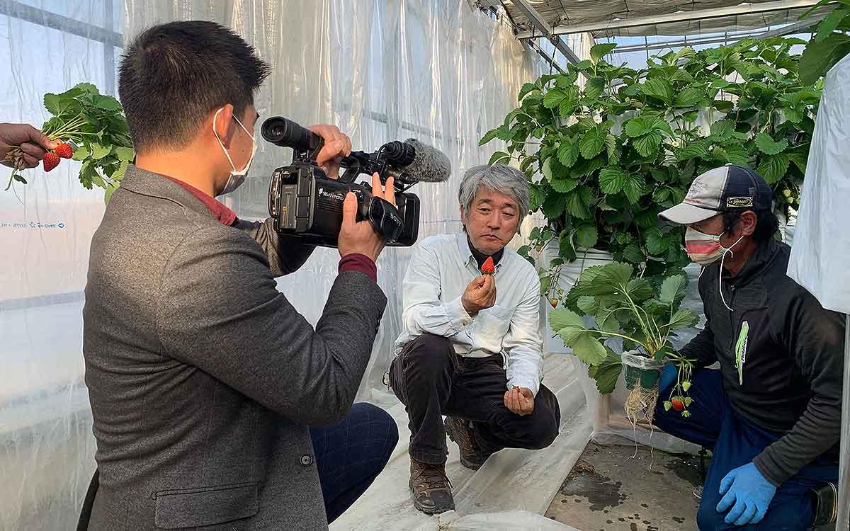 いちごの立体栽培と高設栽培のいちごの食べ比べの撮影シーンの画像